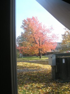 trees are turning red, carpet of yellow leaves