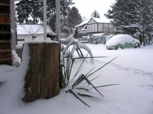 stump, bent-over plant, car, houses, all smothered in a layer of snow