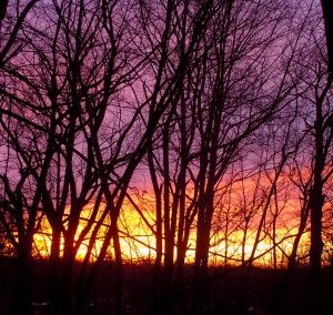 streaks of colored sky glowing behind the bare branches of dark trees