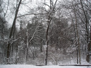 dark trees, branches laden with clumps of snow