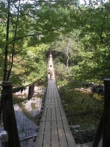 wood bridge with rope railing stretched over a green ravine