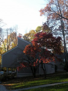 _sunlight makes a red-leaved tree glow at the side of grey apartments_