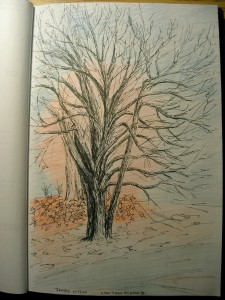 _bare-limbed tree in black pen, red haze of another tree behind it in colored pencil, orange-red leaves on the ground near both, and blue-gray clouds_