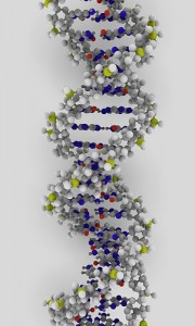 _dna strand (credit: ynse on flickr)_
