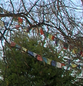 _Prayer flags hung in a bare-limbed tree_