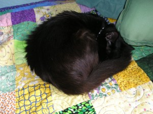 black cat curled up in a ball, asleep, on top of a patchwork quilt
